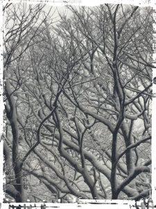 残念ながら大雪になってしまいましたね😱